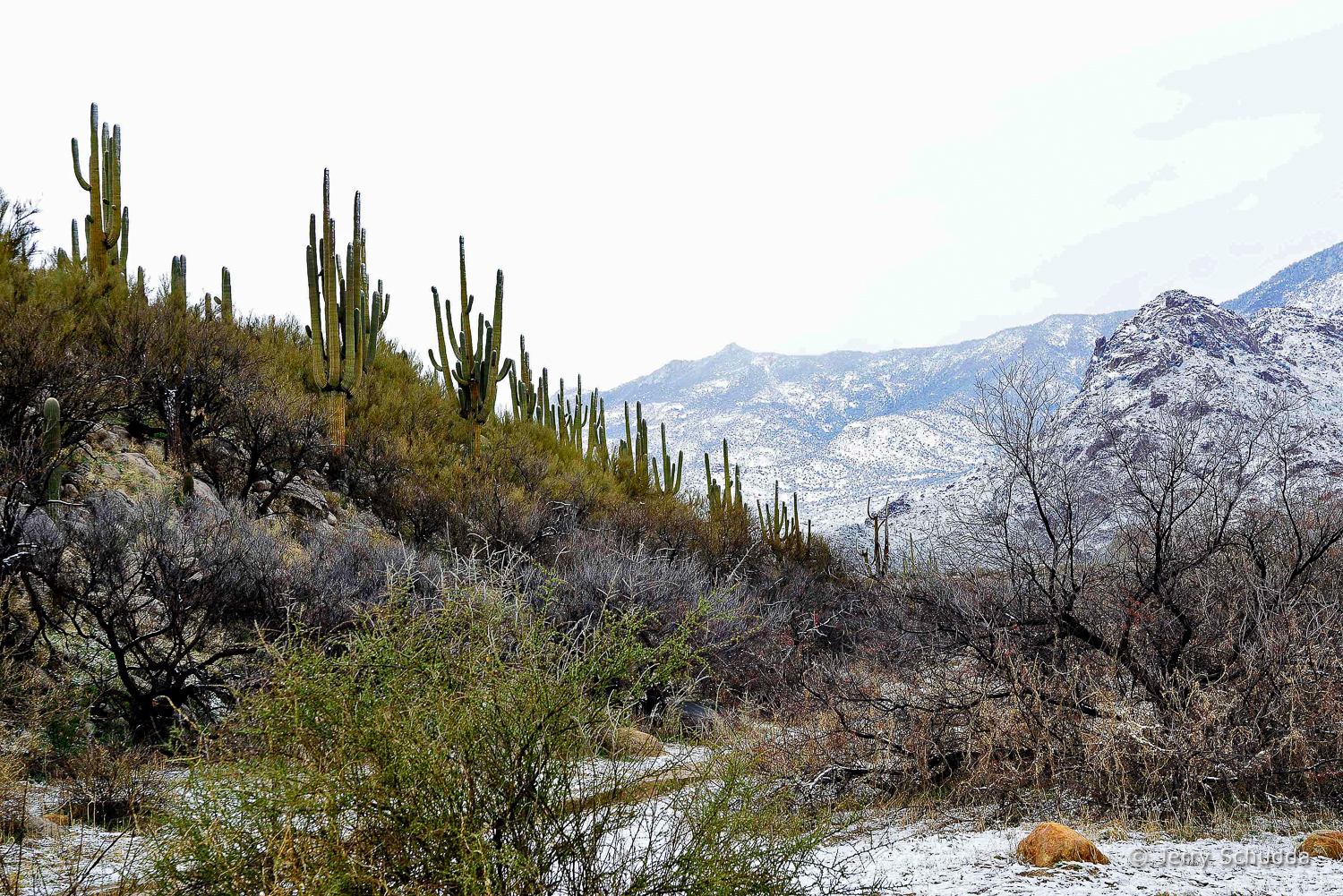 A rare dusting of snow in the lower Catalina Mountains near Tucson ...