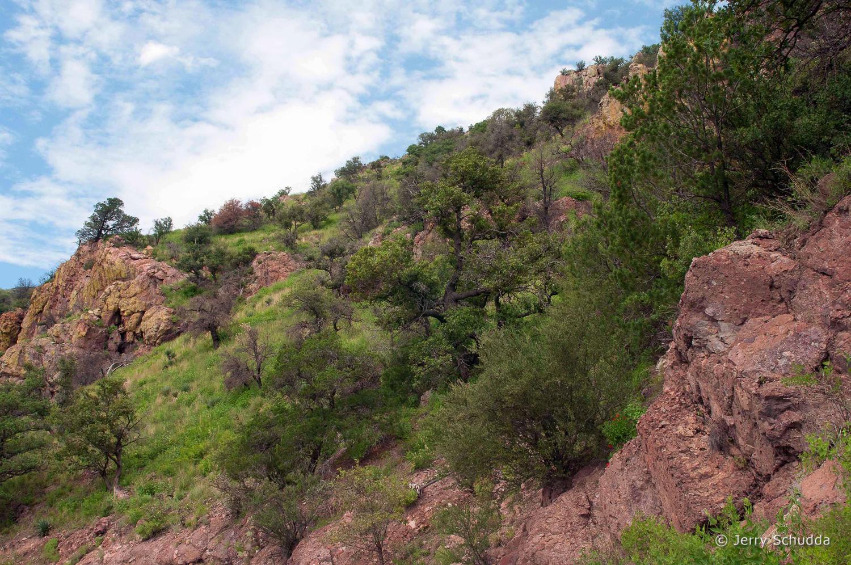 Coronado National Forest - Huachuca Mountains - Southern Arizona 1