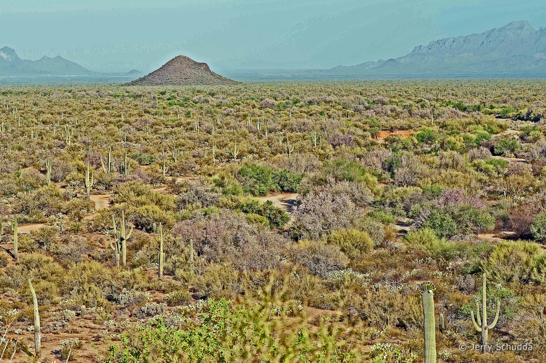 Sonoran Desert - Iron Mine Hill near Marana Arizona