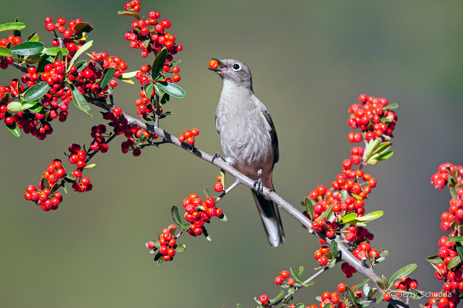 Townsend's Solitaire 2